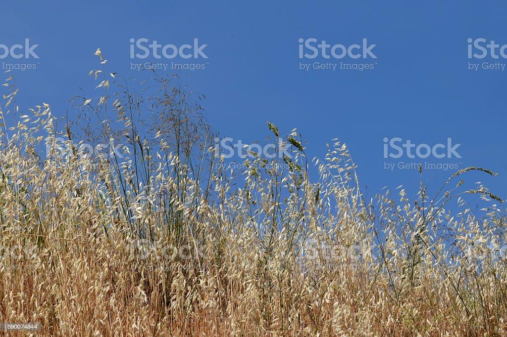 summer dry plants stock photo