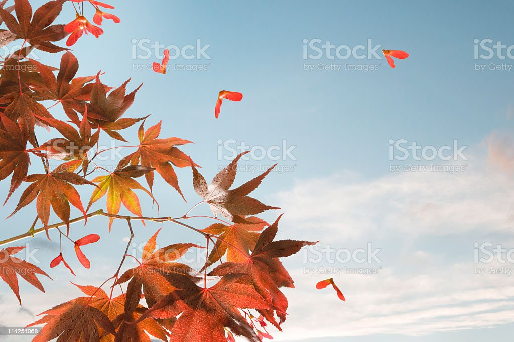Summer ends Autumn begins royalty-free stock photo
