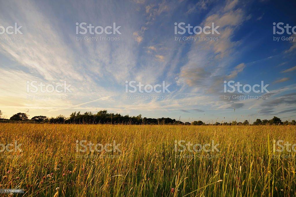 Summer Evening royalty-free stock photo