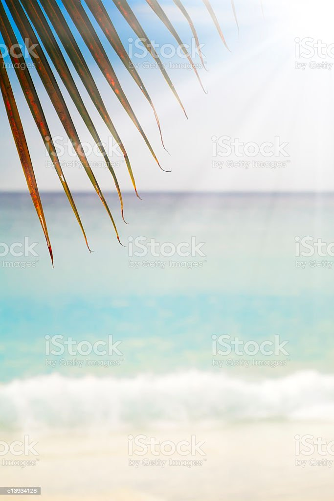 Summer exotic sandy beach with blur palms and sea background stock photo