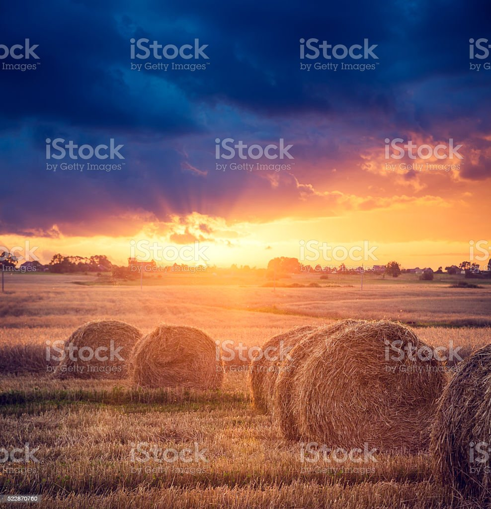 Summer Farm Scenery with Haystacks. Sunset View. stock photo