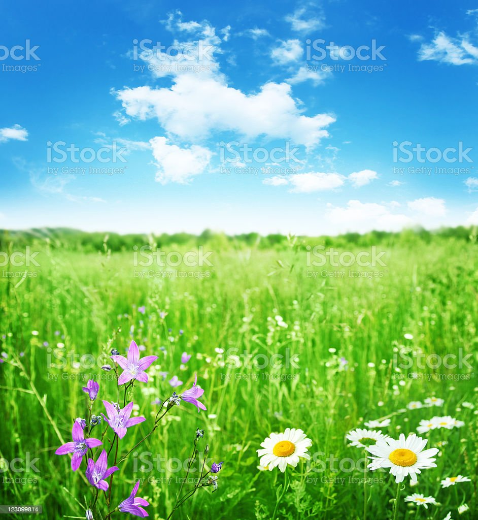 Summer field and blue sky. royalty-free stock photo