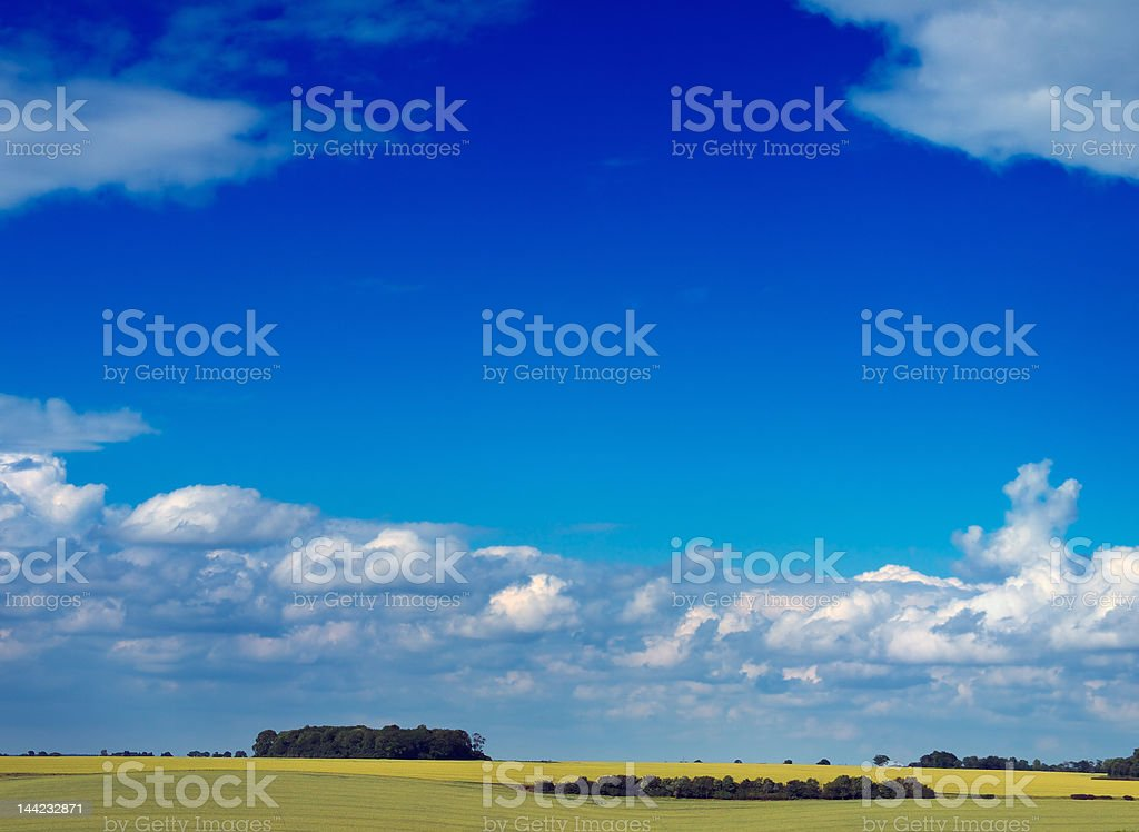 Summer field and sky royalty-free stock photo