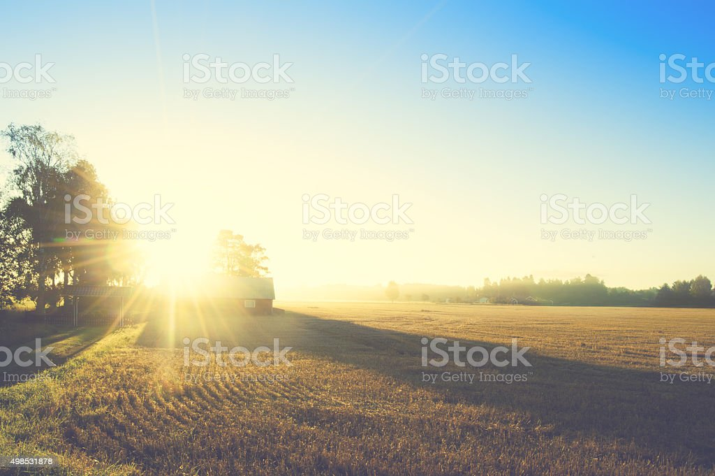 Summer  field in Sweden with stunning beautiful sunrise stock photo