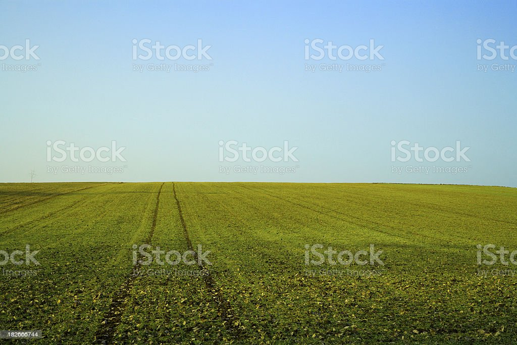 summer field landscape royalty-free stock photo