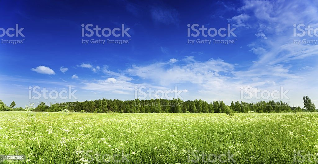 Summer field over blue clear sky royalty-free stock photo