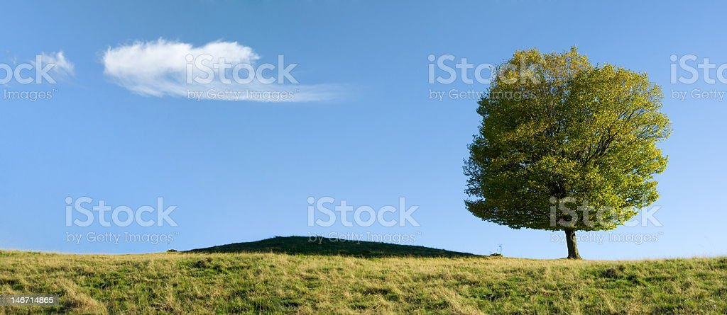 Summer field royalty-free stock photo