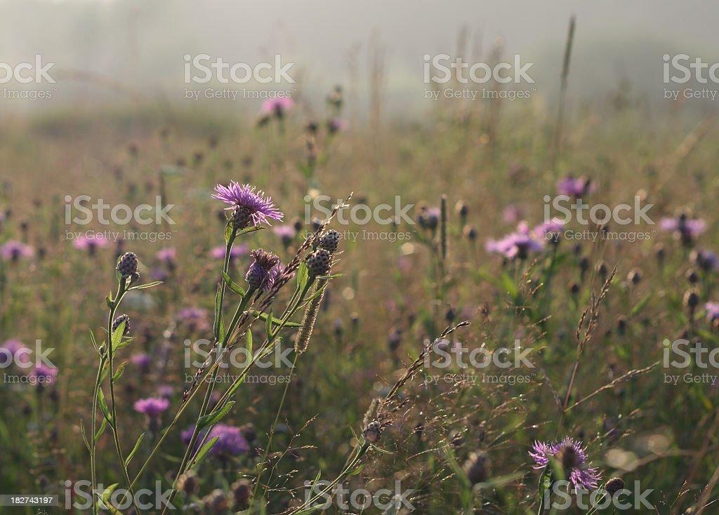 summer field royalty-free stock photo