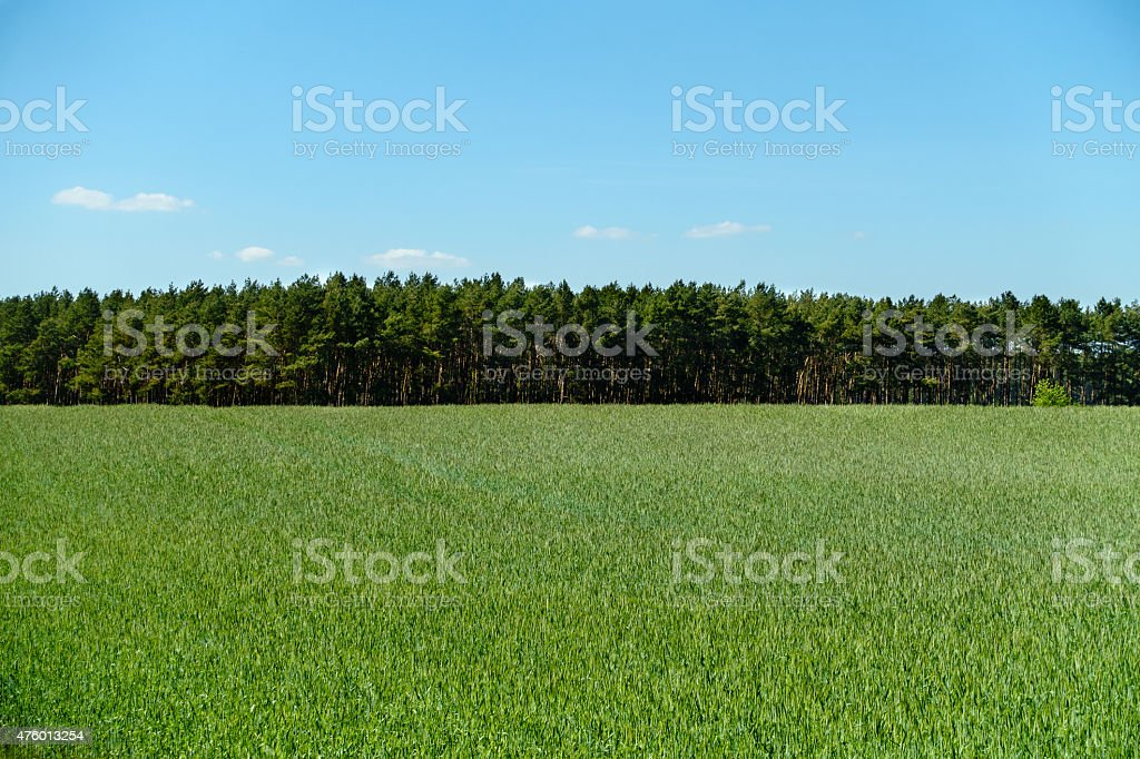 Summer Field stock photo