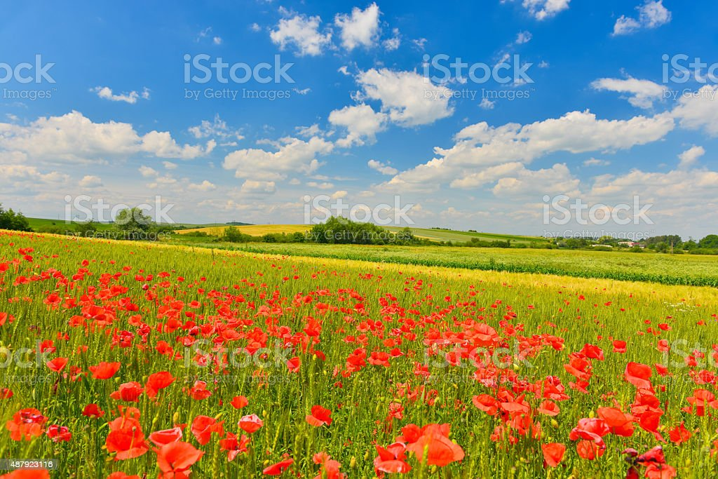 Summer field stock photo