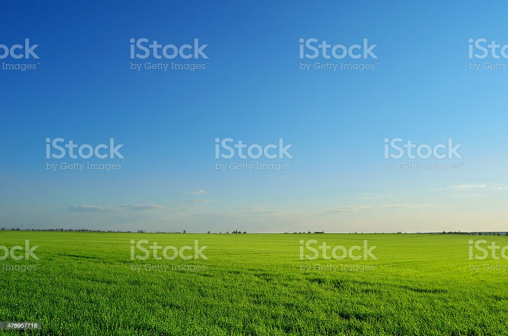 summer field under clear sky stock photo