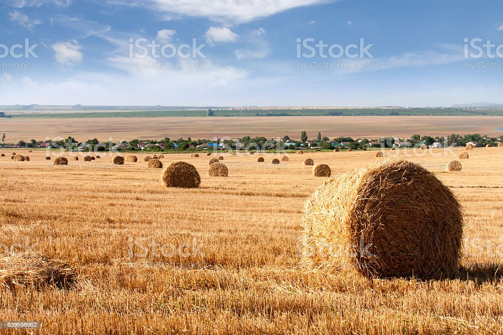 Summer Field with Hay Bales as background stock photo