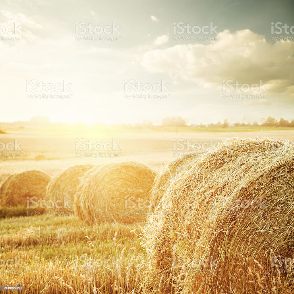 Summer Field with Hay Bales at Sunset stock photo