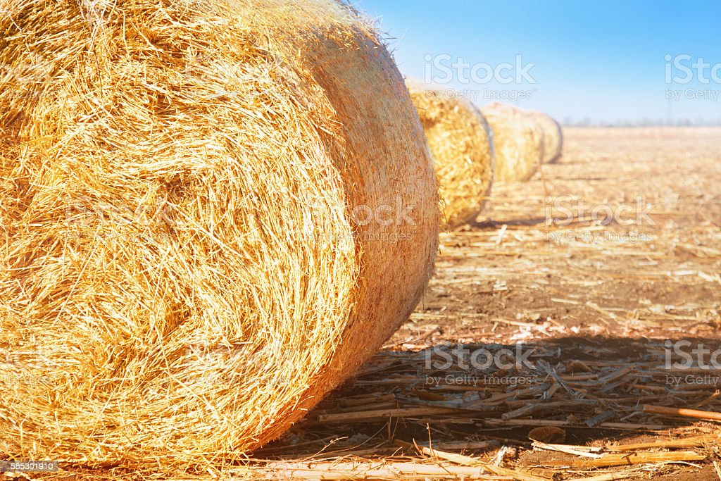 Summer field with hay bales stock photo