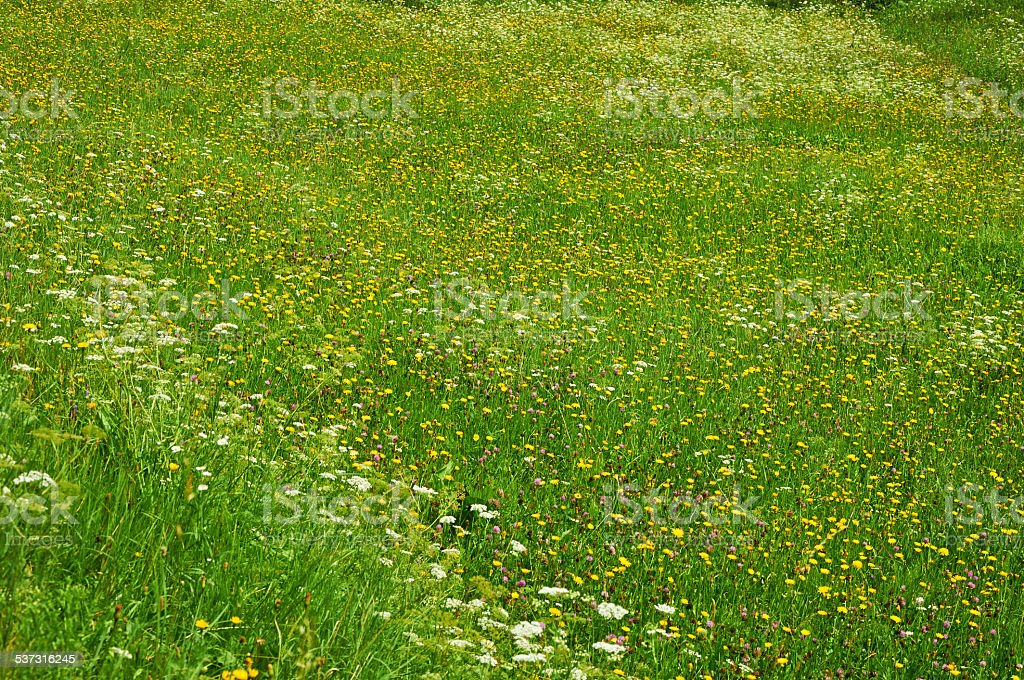 Summer field with many different flowers stock photo