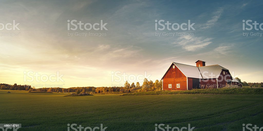Summer field with red barn stock photo