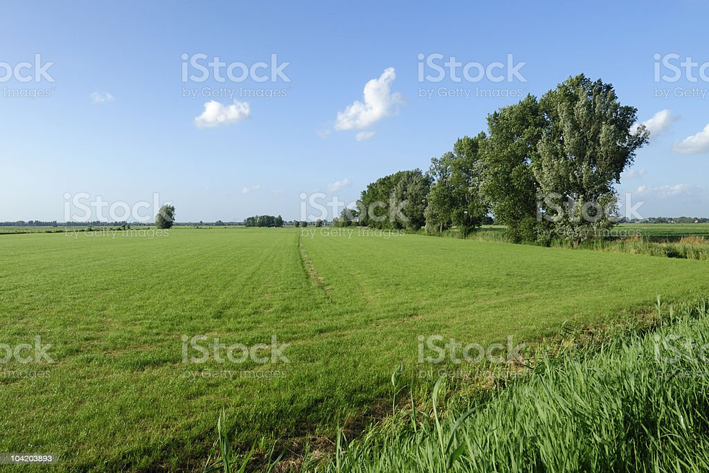 Summer field with trees royalty-free stock photo