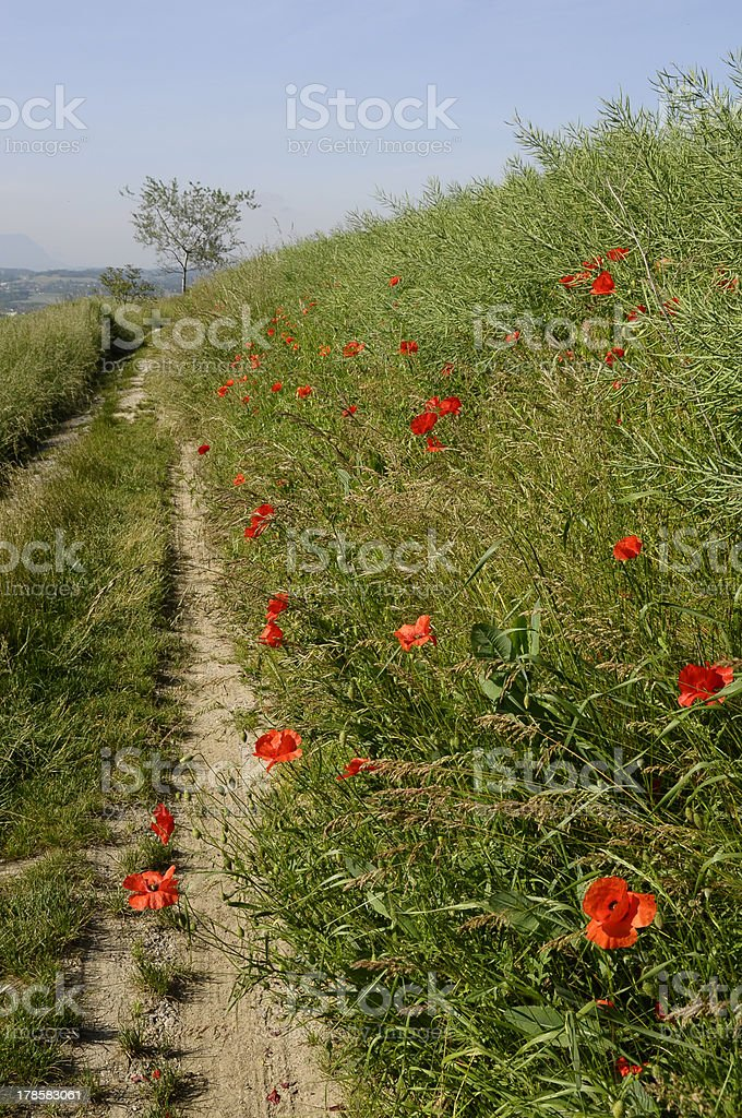 Summer fields and blue sky royalty-free stock photo