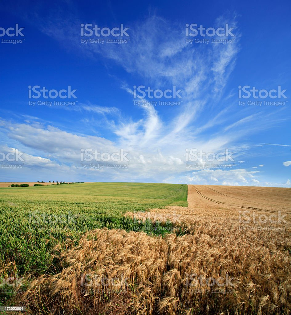 Summer Fields royalty-free stock photo