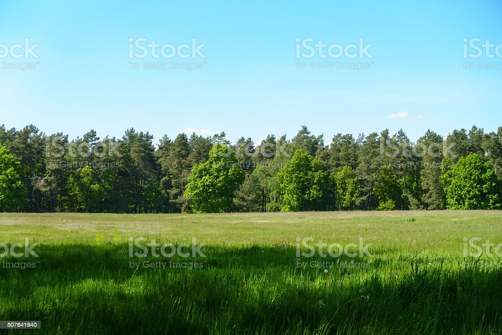 Summer Fields stock photo