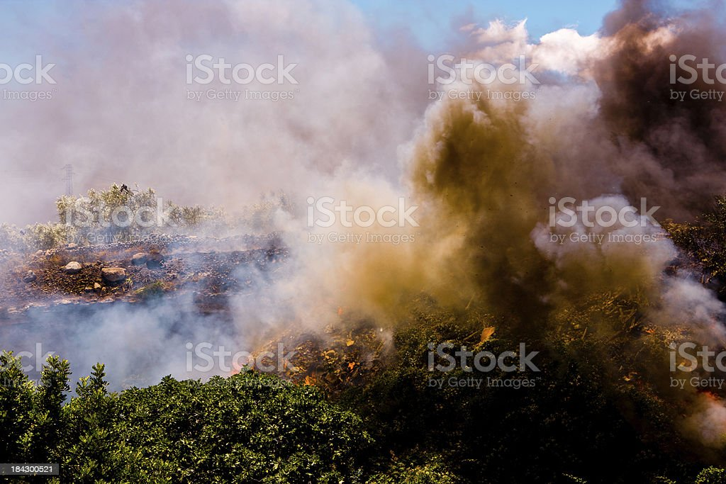 Summer fire royalty-free stock photo