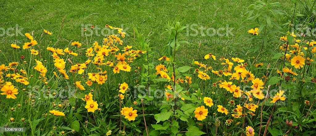 Summer flower background royalty-free stock photo