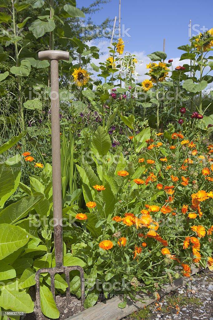 Summer Flower Border stock photo