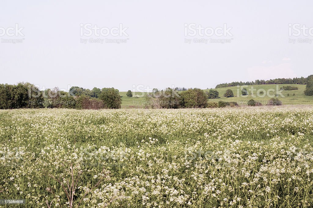 Summer flower field and forest royalty-free stock photo