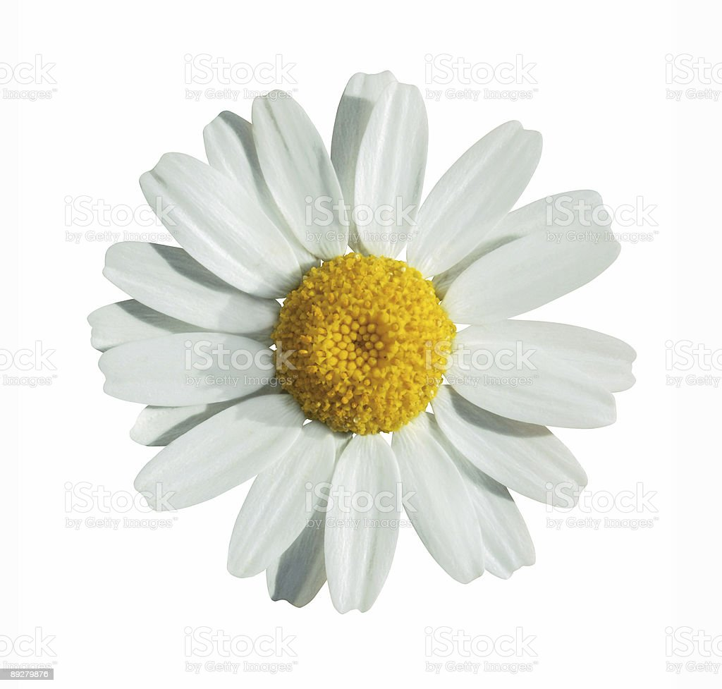 Summer flower on white with path royalty-free stock photo
