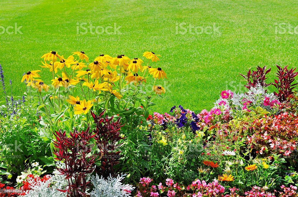 summer flowerbed and green lawn stock photo