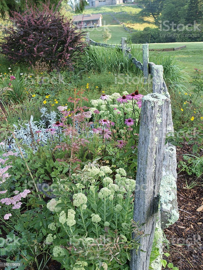 Summer Flowers against a Split Rail Fence royalty-free stock photo
