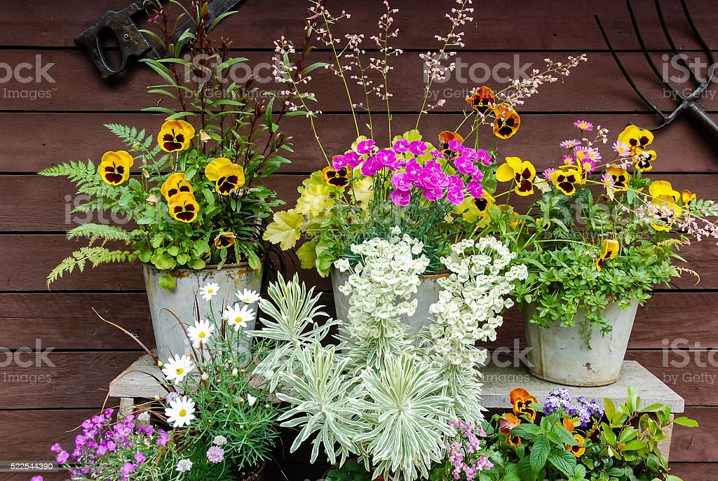 Summer flowers and Herbs in Pots stock photo