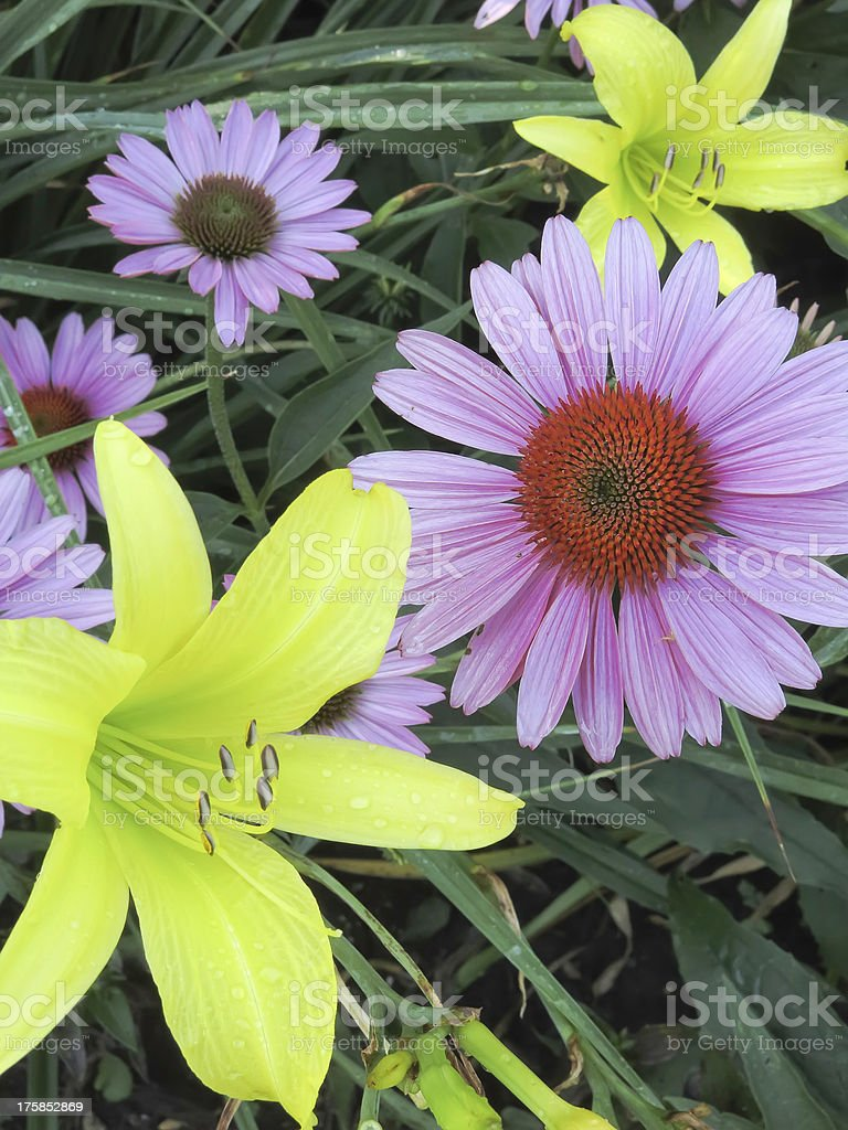 Summer flowers at peak showiness royalty-free stock photo