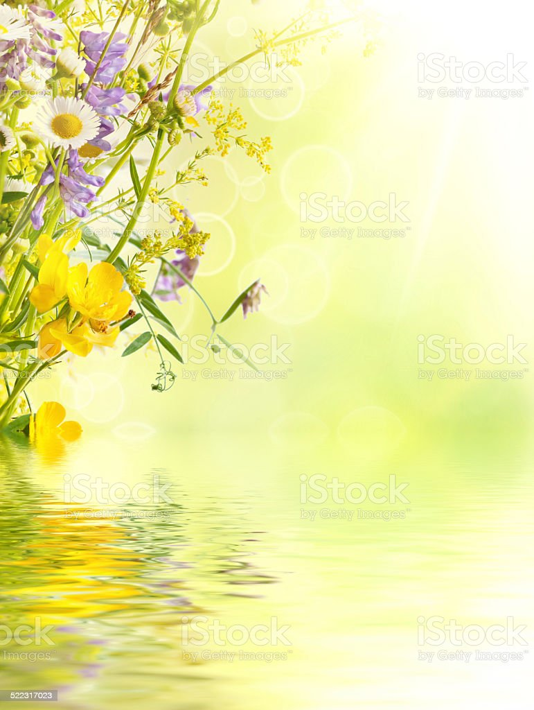 Summer flowers background stock photo