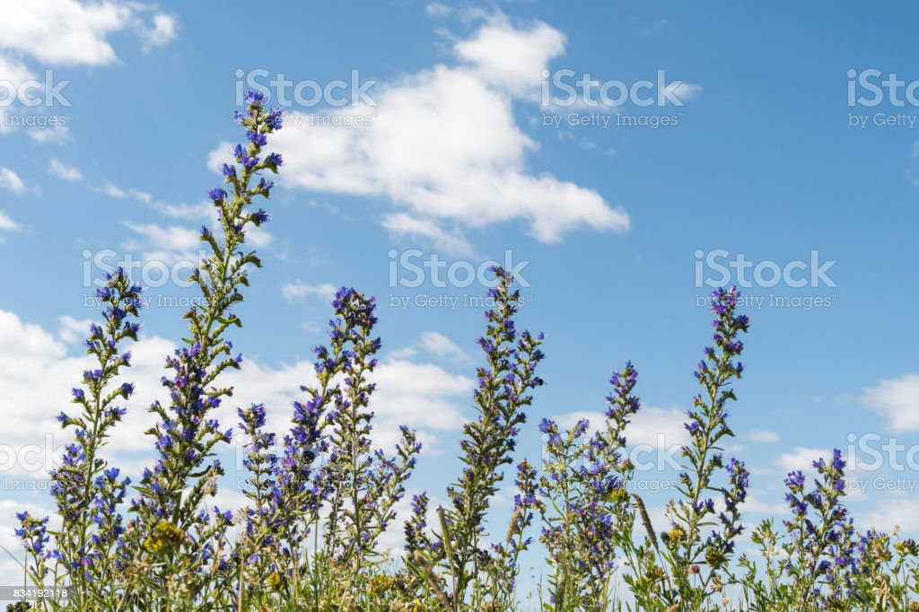 Summer flowers by a blue sky stock photo