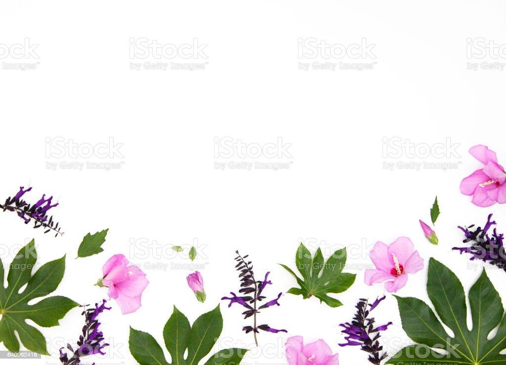 Summer flowers frame stock photo