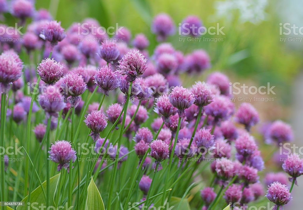 Summer flowers in the grass. stock photo
