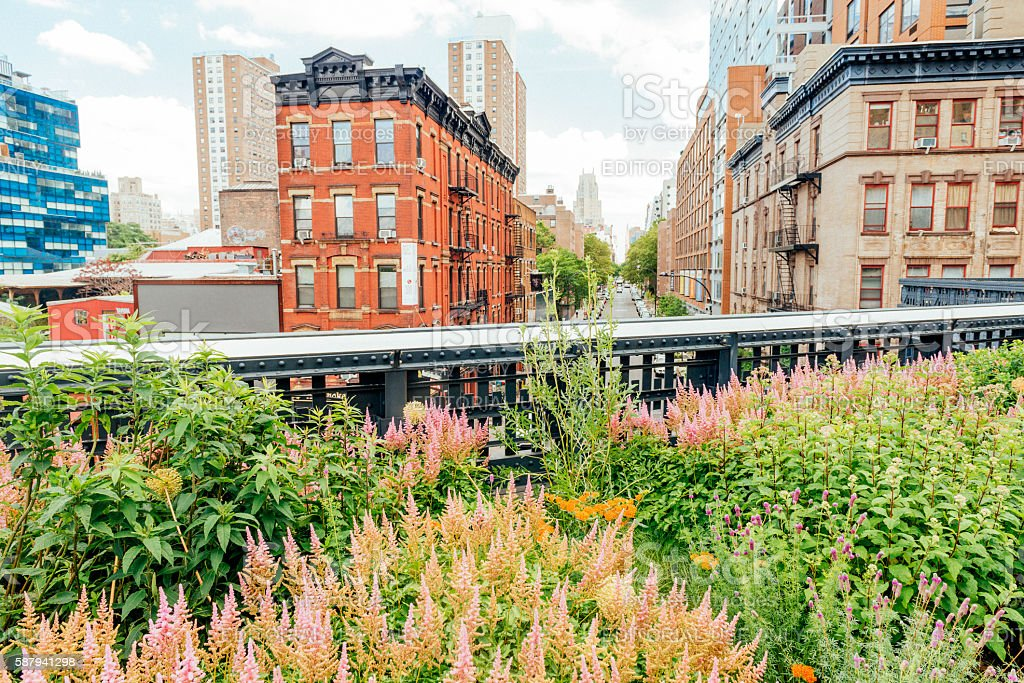 NYC Summer Flowers in Urban High Line Park with Buildings stock photo