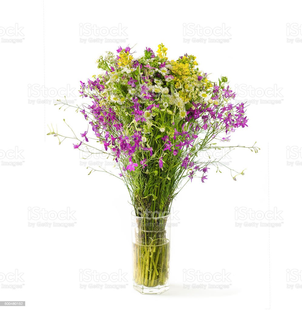 Summer flowers on white stock photo