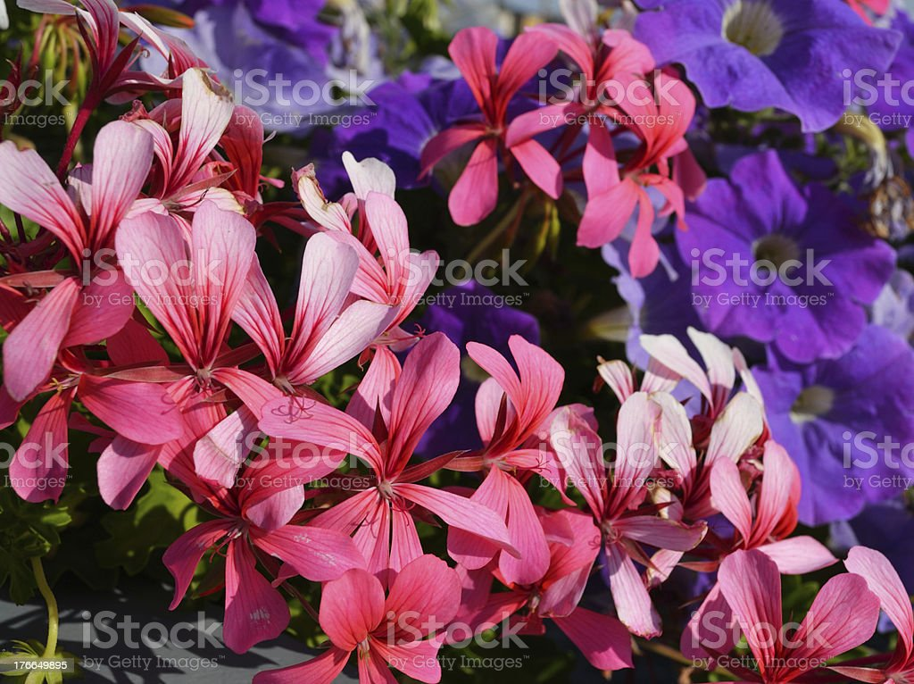 Summer Flowers royalty-free stock photo
