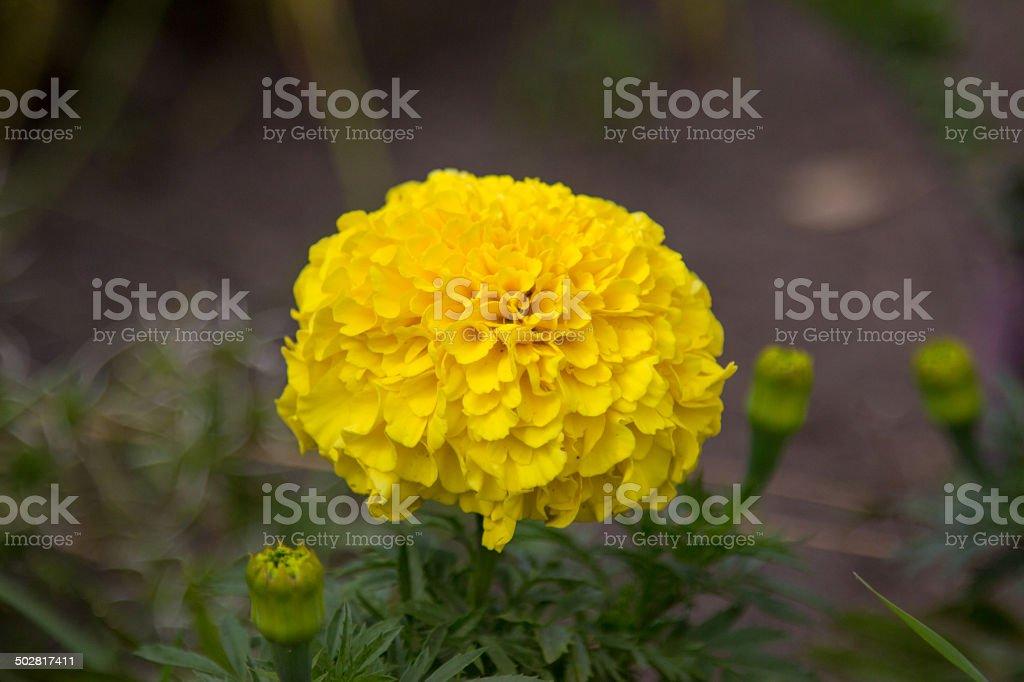Summer flowers. stock photo