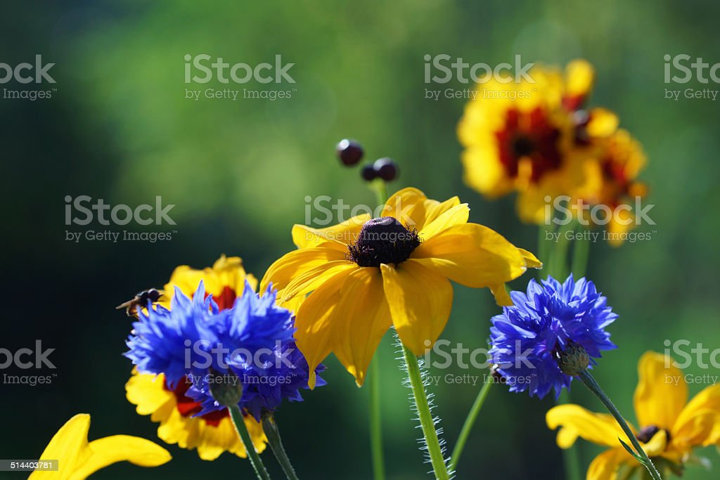 Summer flowers stock photo