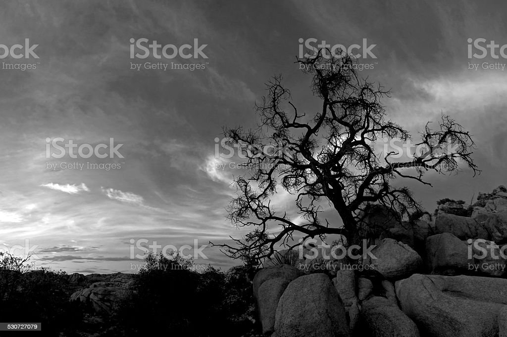 Summer Forces in black and white stock photo