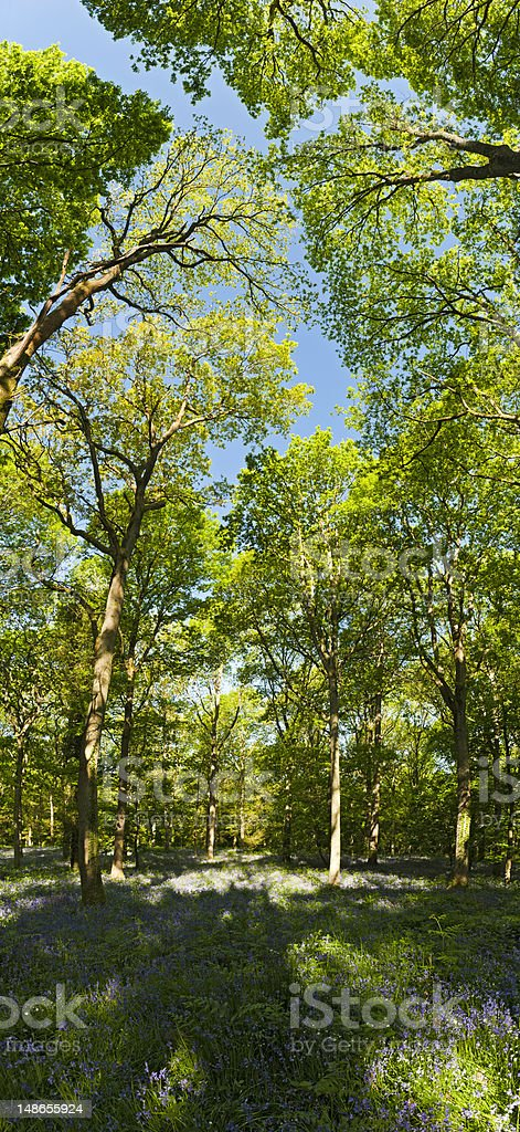 summer forest canopy idyllic wildflower woodland green foliage wilderness panorama royalty-free stock photo