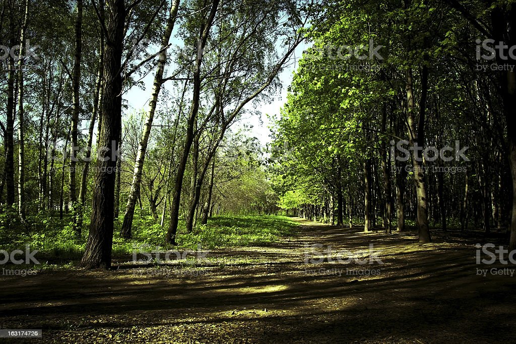 Summer forest royalty-free stock photo