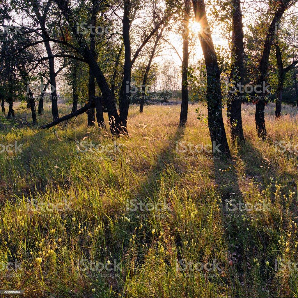 Bosque de verano foto de stock libre de derechos