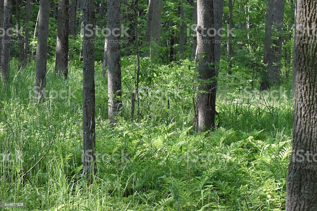 Summer Forest stock photo