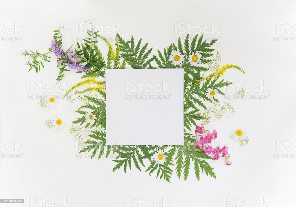 Summer frame with different herbs and flowers stock photo