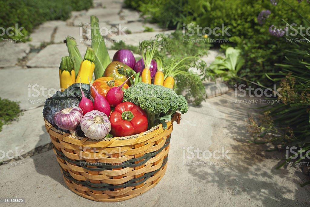 Summer Fresh Garden Vegetable Harvest in Basket Hz royalty-free stock photo