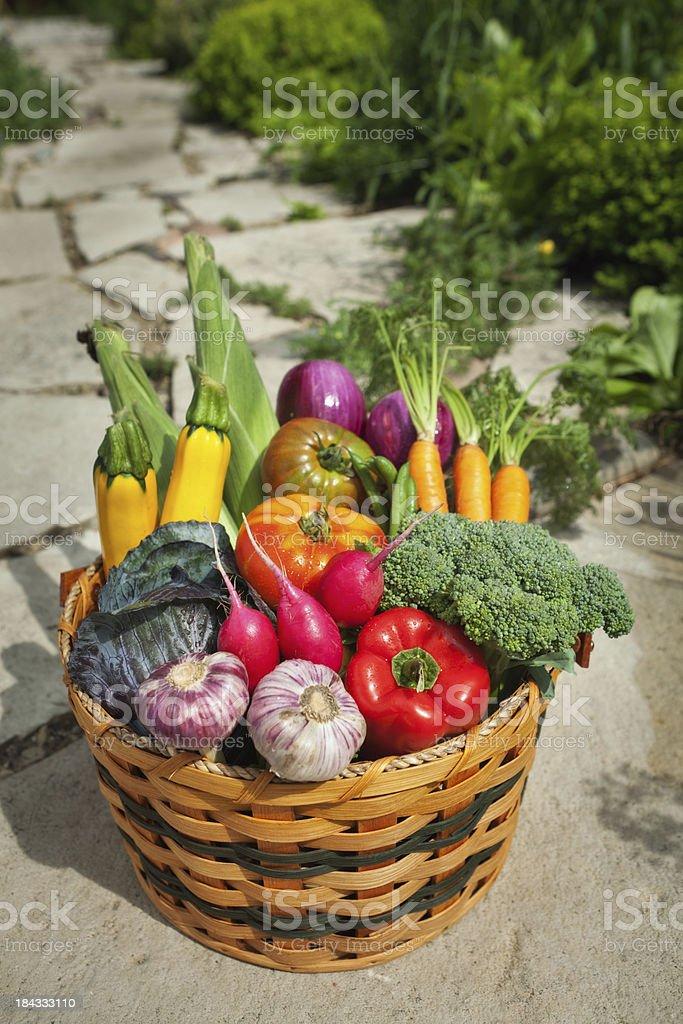 Summer Fresh Garden Vegetable Harvest in Basket Vt royalty-free stock photo